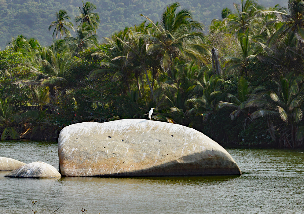 A lone Ardea alba on top of a large grey rock in the middle of a river with palm trees in the background