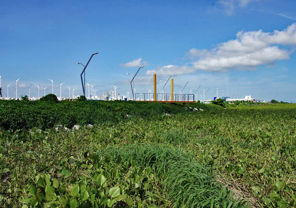 Vegetation growing on the Magdalena river with Barranquilla high-rises in the background