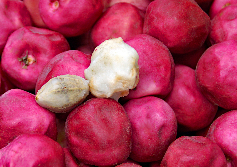 A group of red and fuchsia-colored Chrysobalanus icacos fruit with one fruit pealed exposing the white pulp