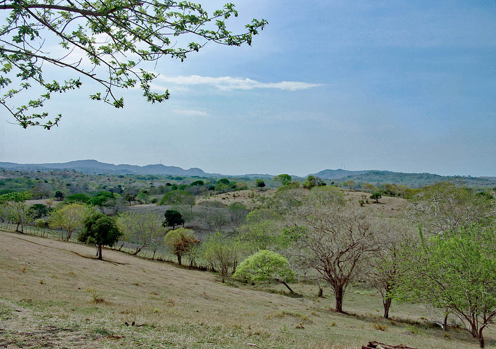 Colombia pasture land during the dry season