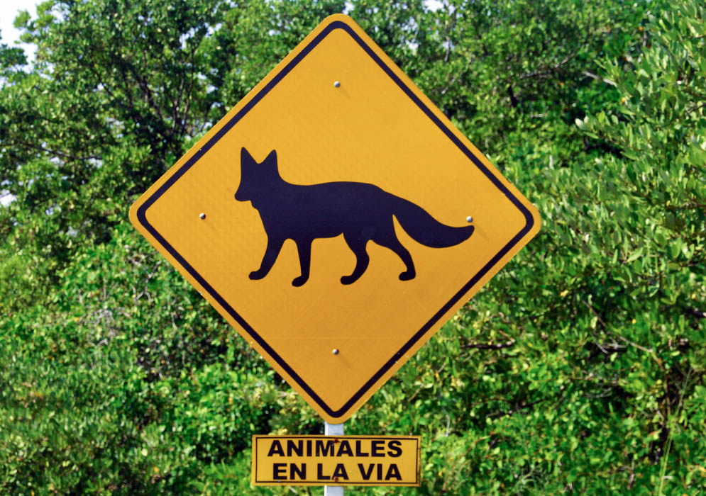 Colombian road sign warning of foxes on highway