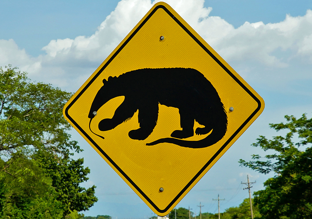 Colombian road sign of an anteater