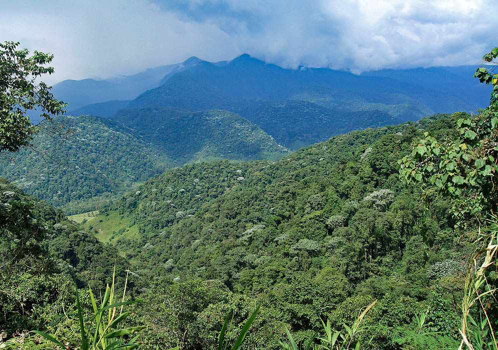 The green Andes mountains near La Bella, Colombia