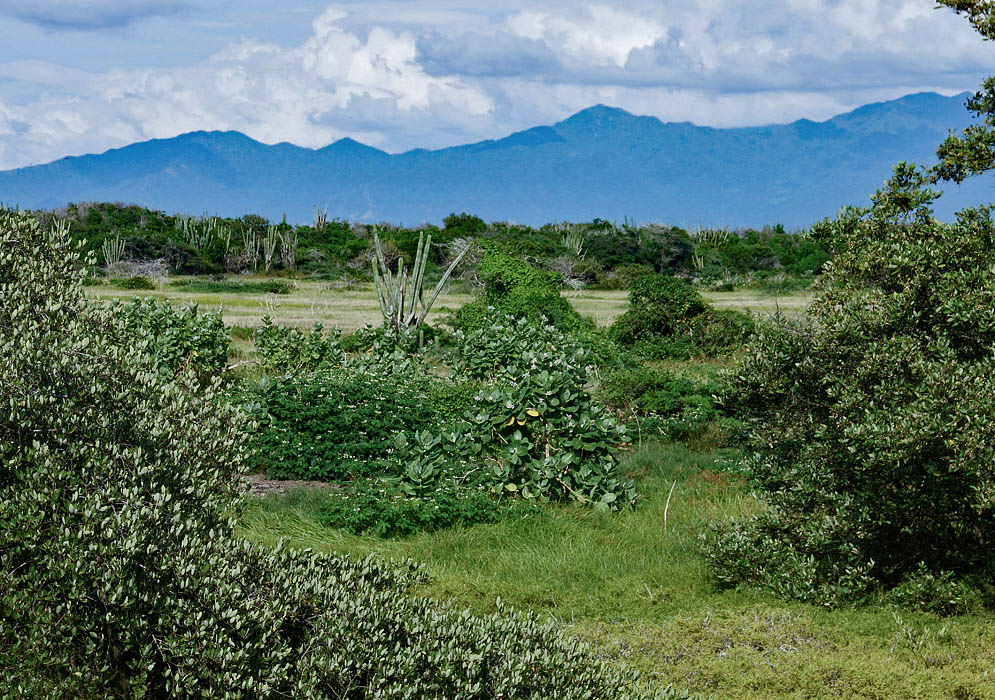 The xeric lowlands with the Sierra Nevada de Santa Marta in the background