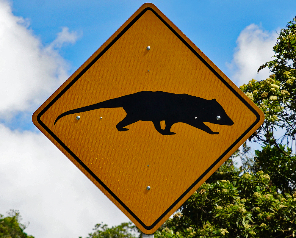 Colombian road sign of an opossum