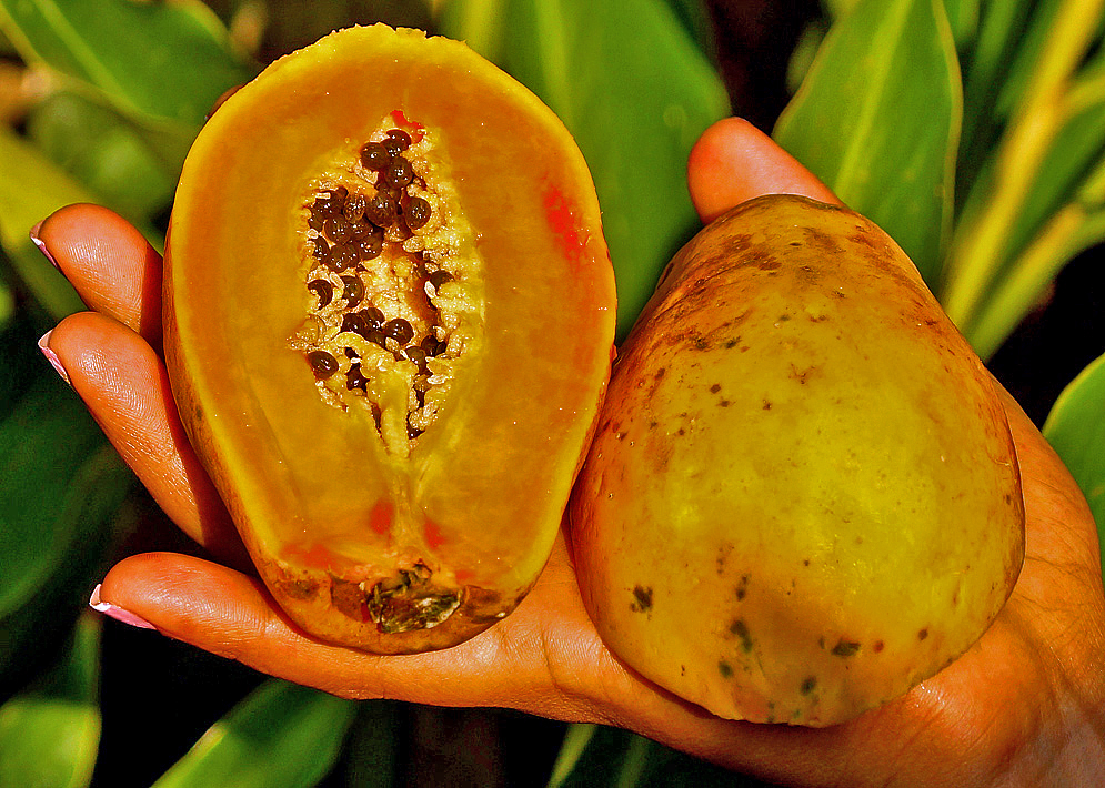 An halved orange Carica papaya in the palm of a hand