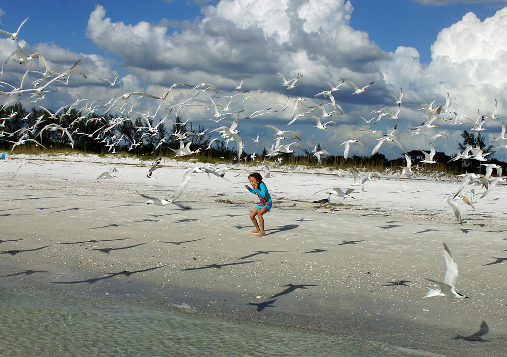 A young girl on the beach stooping as a flock of seagulls fly over her